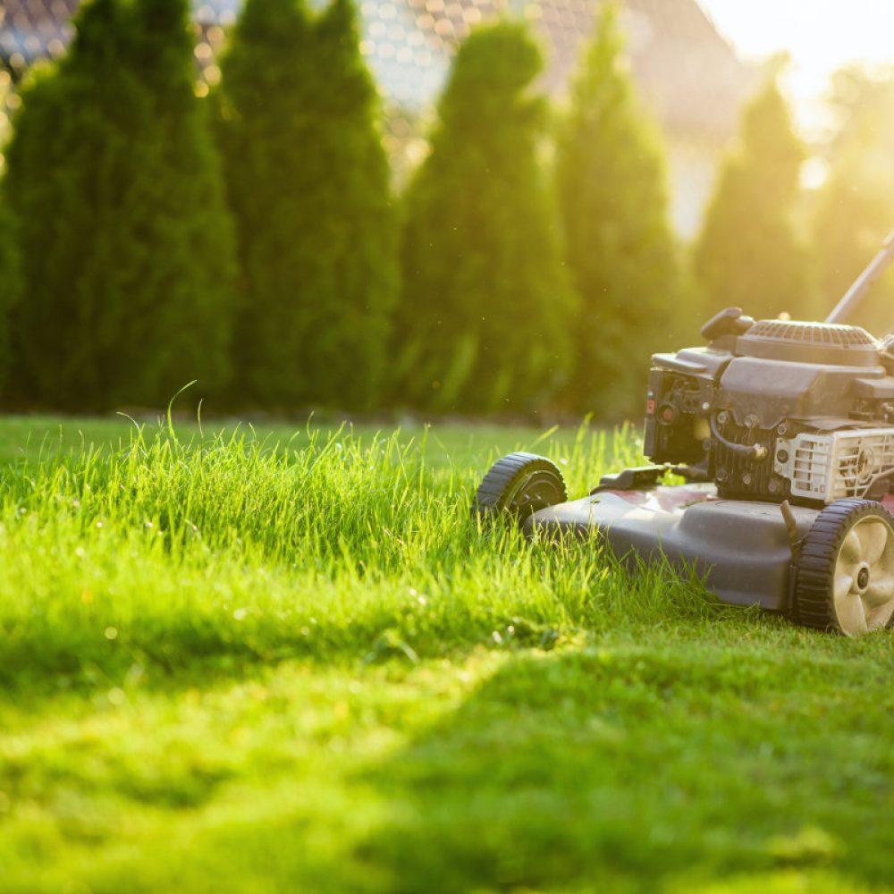 entretien-tonte-de-pelouses-dans le pays-de-gex par votre paysagiste àSaint jean de gonville en service à la personne